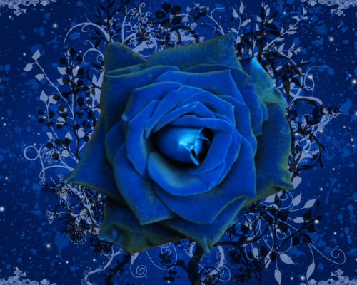 El llanto de la rosa, de Silvia Vicente